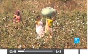 GM: El fin del sueño Monsanto en la India?