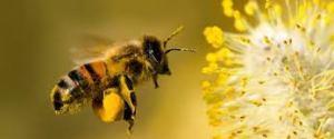 Ayuda abejas sobreviven mediante la adición de plantas nativas de paisaje
